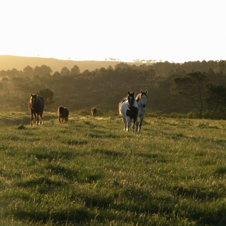Horses Western Cape